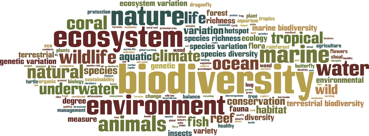 "What is a ""biodiversity hotspot"" and how is it different from other conservation and protected areas?"